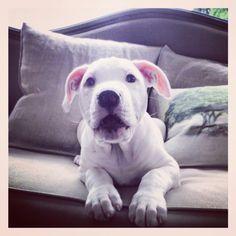 Willa my darling puppy girl ♥♥♥