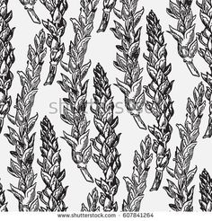 Seed Of Sarrazin Stock Images, Royalty-Free Images & Vectors ...