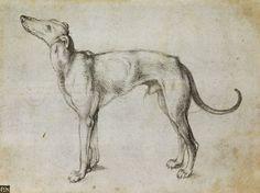 Albrecht Dürer (1471-1528).