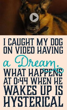 I caught my dog on video having a dream... what happens at 0:44 when he wakes up is hysterical!!!