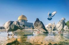 Rose Flower Photos, Palestine Art, I Will Protect You, Dome Of The Rock, Palestinian Embroidery, Beautiful Mosques, Islamic Pictures, Holy Land, Beautiful Soul