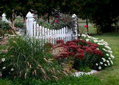 sedum and onrnamental grass (pretty fence) plant IDs: Mums (Chrysanthemum cvs., annual) 'Autumn Joy' sedum (Sedum 'Autumn Joy', Zones 3-8) 'Karley Rose' fountain grass (Pennisetum orientale 'Karley Rose', Zones 6-10) :( we're in zone 4. Montauk daisies (Nipponanthemum nipponicum, Zones 6-10) :( we're in zone 4.