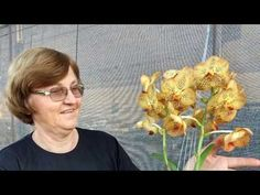 Mini Orquideas, Orchids, Youtube, Nursery Trees, Charms, Gardening, Garden, Growing Up, Plants