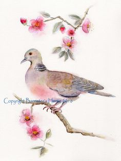 TURTLE DOVE fine art Giclee Watercolour by BarristersHorse on Etsy