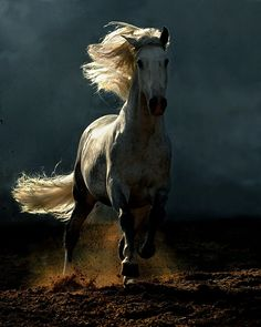 Horse by terrie
