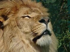 Hugo enjoying the sunshine. The calm before the storm. #sunshine #wales #lions…