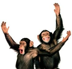 Two funny chimps Animals And Pets, Baby Animals, Funny Animals, Cute Animals, Strange Animals, Primates, Mammals, Baby Chimpanzee, New World Monkey