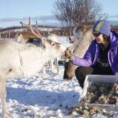 Workaway in Norway. Help with huskies and reindeer in North Norway Volunteer Work, Work With Animals, Reindeer, Norway, Husky, Ideas, Husky Dog, Thoughts