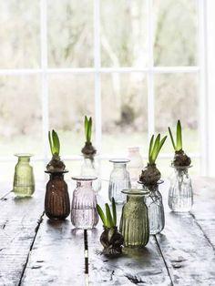 Richt ihr auch den Frühling?#vase #hyazinthen #freshflowers #spring Grand Cherokee Wj, Bulb Vase, Spring Bulbs, Glass Texture, Bordeaux, Clear Glass, Vintage Fashion, Display, Handmade