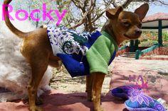 Rocky el chihuahua, suéteres y abrigos artesanales para perro Hanak. Chiapas, México.