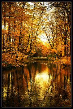 Golden nature (3) | Parc de la Tête d'Or, Lyon, France. | Megara Liancourt | Flickr