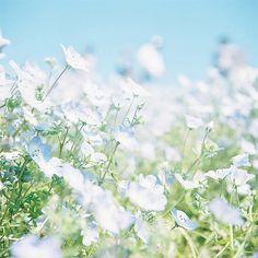 Sunny Day♪ | Flickr
