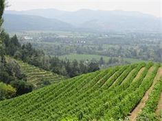 A Napa Sonoma Wine Tasting Driver