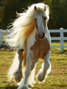 Horse with long tail and flowing mane