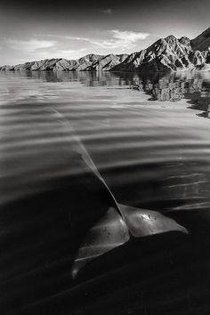 Сила и грация: фантастические фото китов и дельфинов
