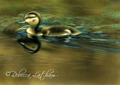 "Afternoon Swim - Mallard Duckling, 5""x7"", watercolor on board, ©Rebecca Latham"