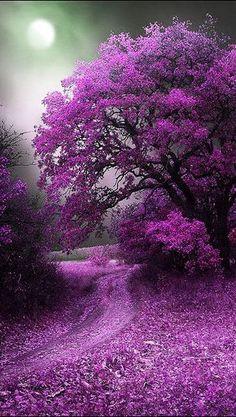 Beautiful tree in purple Beautiful World, Beautiful Places, Stunningly Beautiful, Beautiful Smile, Amazing Places, Wonderful Places, All Things Purple, Purple Stuff, 5 Things