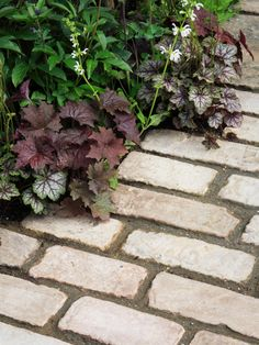 Plants on Brick Walkway | HGTV