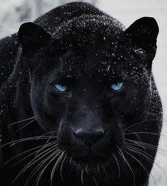 Jaguar Wallpaper, Wild Animal Wallpaper, Black Panthers, Black Tigers, Wild Animals Photos, Animals Images, Beautiful Cats, Animals Beautiful, Jaguar Noir