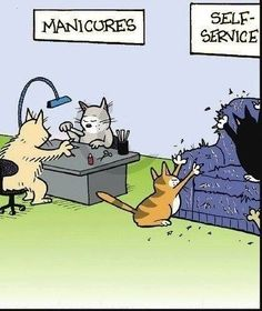 Cat lovers are laughing and crying at the same time at this one.