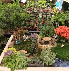 Charmant Fairy Garden In A Raised Garden Bed Table ~ Rainbow Gardens, Bandera Rd, San  Antonio TX | Fairy Gardens | Pinterest | Bed Table And Gardens