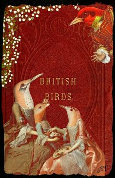 British Birds. (One of the oddest bird book covers I've seen)