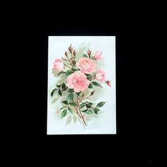 Red rose post card american greetings excellent condition pink shrub rose card hallmark large colorful flower blank note card 1970 m4hsunfo