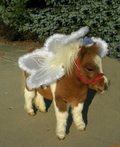 As if the pony weren't cute enough by itself!