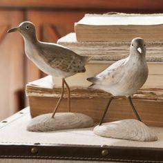 Love shore birds!
