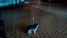 A spooked kitten is trying to figure out what this strange object is. Apparently it is a green ball but the kitten is unaware of that.  It rolls it on the floor and runs away every time the ball turns around.