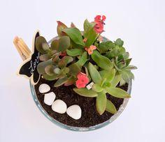 Cadou personalizat, Cadou special, Gradina din ghiveci, Plante birou Begonia, Succulents, Plant, Succulent Plants