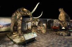 The Denver Museum of Nature and Science - Denver, CO