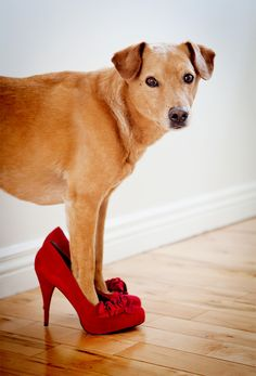 I'm ready for my glamour shot !  ♥ adorable dog pic