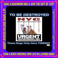 #Save a #DeathrowDog & CHANGE A #LIFE  THESE #DOGS ONLY HAVE THIS 1 NIGHT & YOU!  SHARE & RT! https://www.facebook.com/Urgentdeathrowdogs/photos/a.611290788883804.1073741851.152876678058553/669804353032447/?type=3&theater…