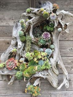 Stunning Vertical Garden for Wall Decor Ideas Do you have a blank wall? do you want to decorate it? the best way to that is to create a vertical garden wall inside your home. A vertical garden wall, also called… Continue Reading → Succulent Gardening, Planting Succulents, Container Gardening, Succulent Planters, Organic Gardening, Vertical Succulent Gardens, Succulent Garden Ideas, Indoor Gardening, Succulent Containers