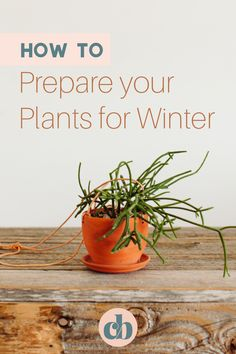 Winter can be hard on house plants. If you're a new plant parent, or just looking for good tips, you've come to the right place. I'm going to share with you my top 5 tips on How To Prepare Your House Plants For Winter! #plantcare #cleverbloom #wintercaretips #plantcare #houseplants #indoorplantcare Cool Plants, Air Plants, Indoor Plants, Build A Terrarium, Buy Plants Online, Low Light Plants, House Plant Care, Diy Planters, Types Of Plants