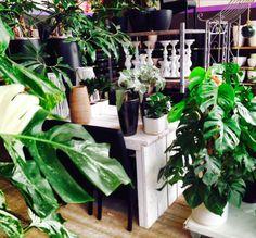 Dé trend van 2015: Botanisch wonen... ofwel je huis inrichten als een soort serre of zelfs tropische kas met veel weelderige Kamerplanten. Supermooi: groene en bloeiende planten zijn nooit te veel in huis en altijd stijlvol!