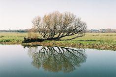 arquerio:  River Waveney, Norfolk by Mrs.Chap on Flickr.