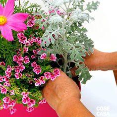 Plants, 3, Houses, Green, Bricolage, Flora, Plant