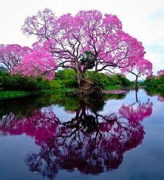 De lente kleurt
