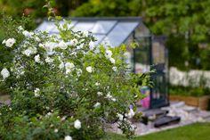 My greenhouse in June Garden Roses, June, Plants, Blog, Outdoor, Outdoors, Blogging, Plant, Outdoor Games