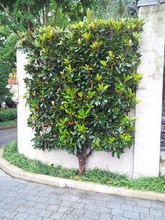 Landscape Gardeners Are Like Outside Decorators! Love-Love This Idea Garden Trellis, Garden Planters, Creepers, Espalier Fruit Trees, Backyard Renovations, Pyrus, Citrus Trees, Vegetable Garden Design, Small Trees