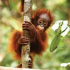 Earthsave Canada - The Problem With Palm Oil