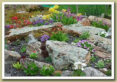 Primula World - A Visual Reference for the Genus Primula