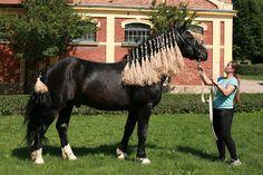 Z DOMEČKU: Koně