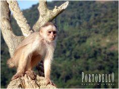 Uma incrível biodiversidade a encantar qualquer pessoa.  #Lugardeserfeliz #ResorteSafári