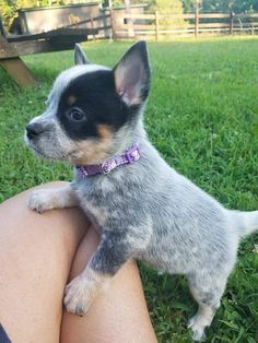 Cute Puppy Breeds, Cute Dogs And Puppies, Baby Dogs, Doggies, Pet Dogs, Dog Breeds, N Animals, Baby Animals Pictures, Funny Animal Pictures