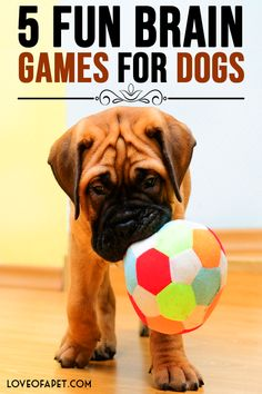 5 Fun Brain Games For Dogs PuppyGames DogPlayIdeas BrainGamesForDogs Dogs is part of Brain games for dogs - Games For Puppies, Brain Games For Dogs, Dog Games, Toy Puppies, Agility Training For Dogs, Brain Training, Training Tips, Dog Enrichment, Bernedoodle Puppy