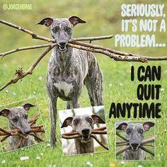 greyhounds with sticks