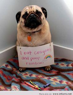 dog shaming pug rainbow